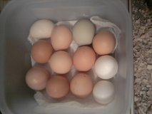 Fresh Eggs in Shorewood, Illinois